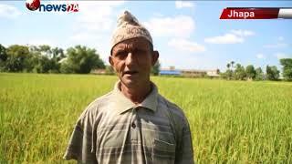 धान सुपरजोन क्षेत्र घोषणा गरेपनि किसानलाई भने बजारकै पिरलो – NEWS24 TV