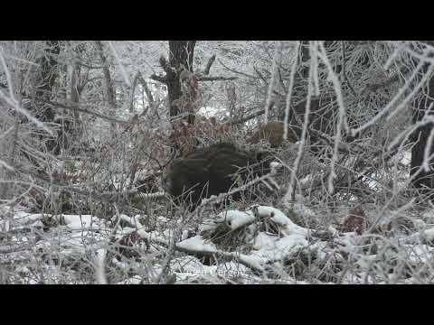 Lončák - video Čergov