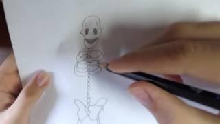 Видеоурок : как нарисовать скелет