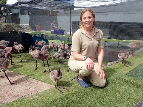 Thinking Pink: Rehabilitating Flamingo Chicks in South Africa