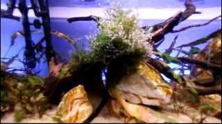 akwarium malawi 160l - dojrzewanie -  part 3