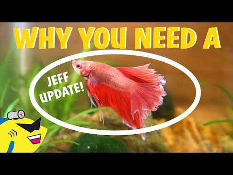 Why You NEED A Betta Fish NOW!