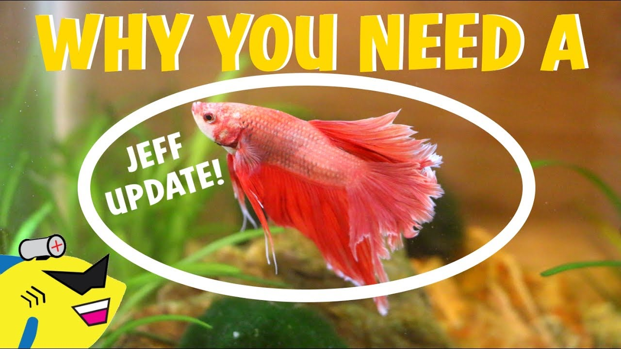 Why You NEED A Betta Fish NOW! - YouTube