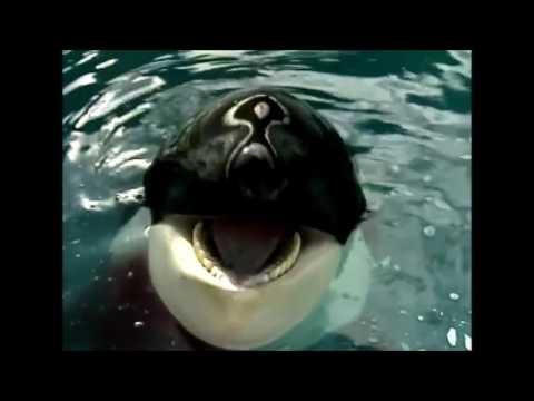 Animal Atlas Cetaceans