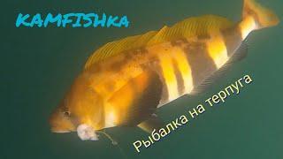 Рыбалка на Камчатке!Тихоокеанский терпуг,треска.