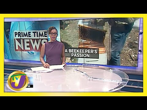 A Sting of Love Beekeeper's Passion in Jamaica | A Ray of Hope | TVJ News