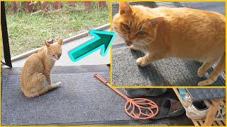 Нашего Рыжего кота подменили другим