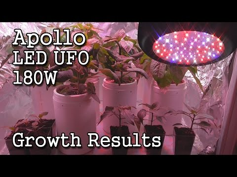 Apollo LED UFO 180W Grow Light -Growth Results & Final Review