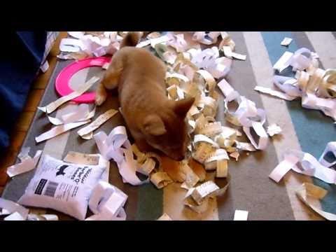 Japanese Shiba Inu paper shredder