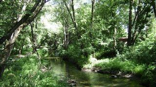 В Белгородской области принят региональный план проведения Года экологии
