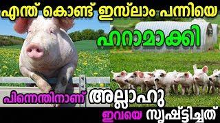 Pig | ഇസ്ലാം പന്നിയെ ഹറാമാക്കി എന്തിനാണ് അല്ലാഹു ഇവയെ സൃഷ്ട്ടിച്ചത് marhaba media