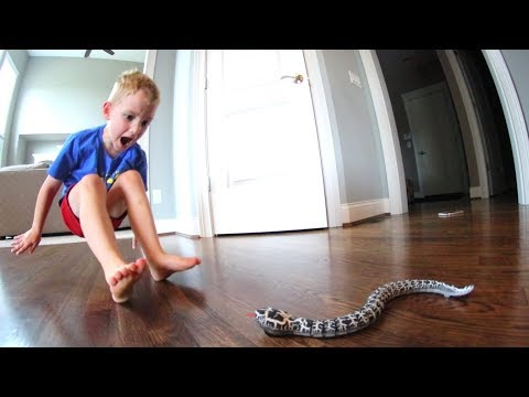 Thumbnail: Dad Scares Son WITH A SNAKE!