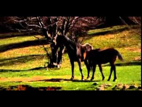 Properties in Bulgaria - Welcome To Bulgaria (Bulgarian Audio Promo)