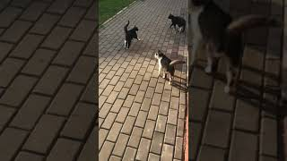 Кошка Маруська