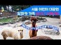 알파카 라이브 - 서울어린이대공원 Alpaca live streaming 170811