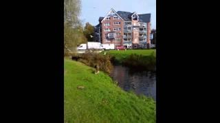 2014 11 09 Zuzie - vor der Fahrt nach Berlin Entenfüttern in Bremen Arsten