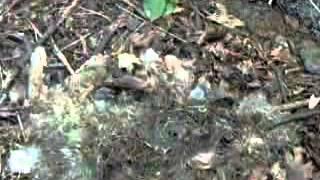 Rabbit decomposition (time-lapse video)