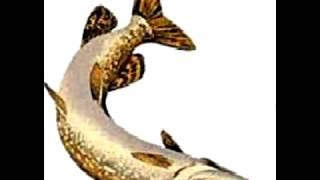 verblou. Бедная рыба. Ему бы так рьяно своих ЖиВ прищучивать