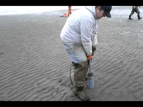How to use a clam gun