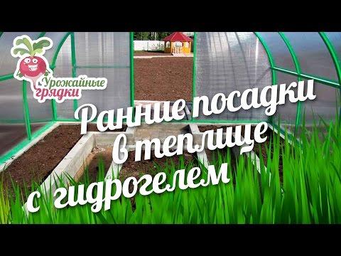 Ранние посадки в теплице с гидрогелем #urozhainye_gryadki
