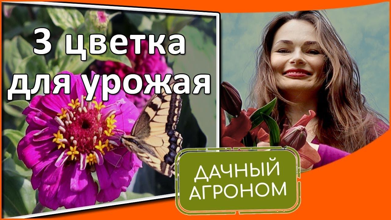 Без этих цветов ваш урожай не такой как мог быть Календула бархатцы настурция в совмещенных посадка