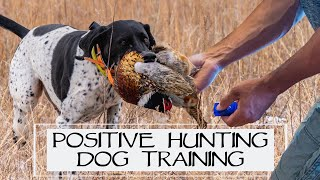 You Asked We Answered  Positive Hunting Dog Training  Episode 36: Part 1