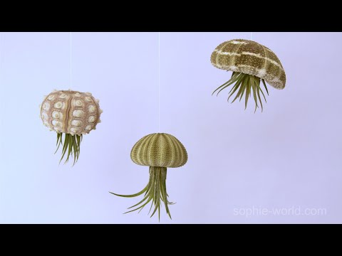 How To Make And Air Plant Jellyfish | Sophie's World