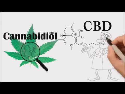 What is CBD?