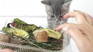 Котенок МАКС и новые питомцы улитки. РЕАКЦИЯ кота.