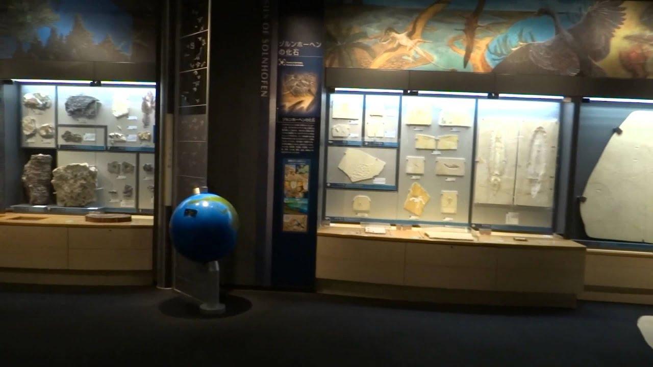 博物館 豊橋 市 自然 史