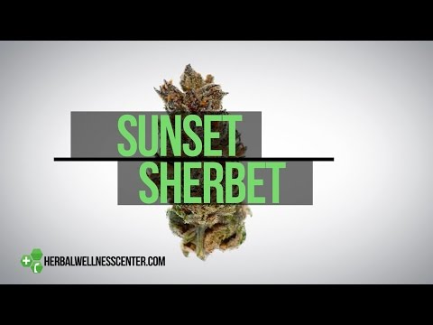 Sunset Sherbet strain review