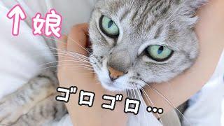 娘に全力で甘えるようになった猫マロちゃん…!