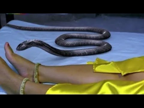 Nagini Dance IPL Version | Main Teri Dushman | Nagini Dance 2018