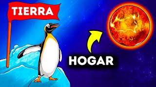 Los pingüinos tienen una sustancia química que solo se encuentra en Venus