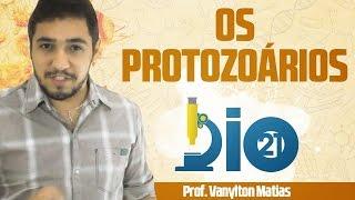 Protozoários - Prof. Vanylton Matias