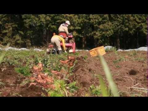 "Soil from Leaves ""explore for ORGANIC FARMING 01"""