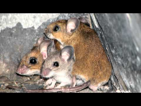 Diary Of A Church Mouse