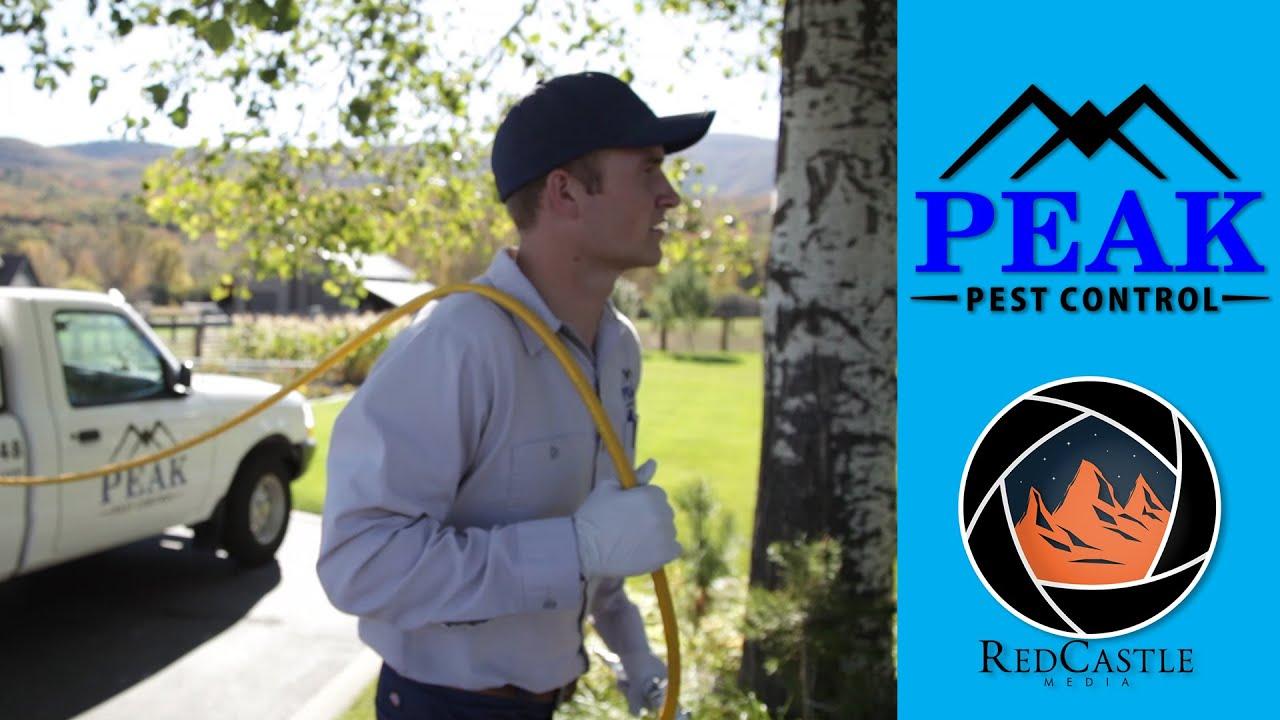 Peak Pest Control Testimonial - Peak Pest Control Testimonial