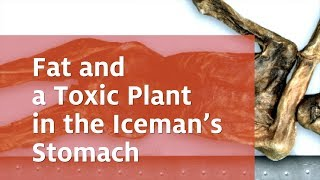 Mummy researchers from Eurac Research have analysed the stomach con...