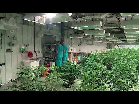 Community College To Offer Courses In Medical Marijuana.
