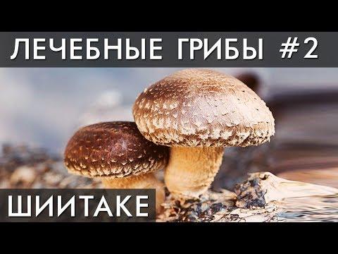 Выращивание грибов шиитаке: лучший способ