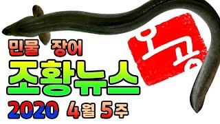 [장어 낚시]ㅡ전국 조황뉴스