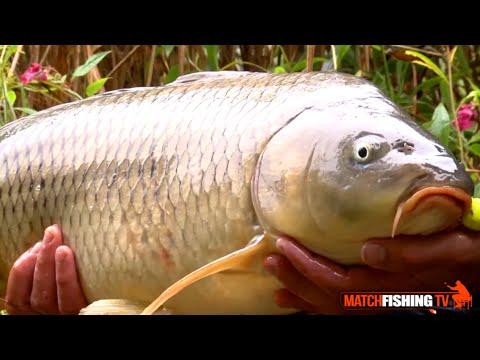 Le pronostic klev sur la pêche