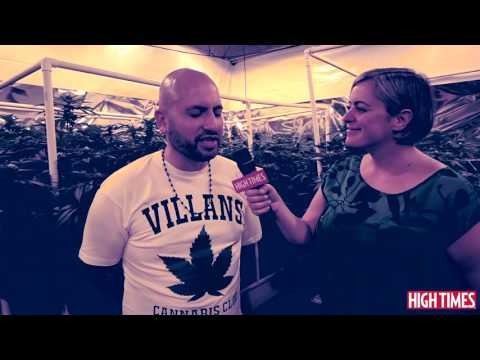 Experience A Live Growroom at the 2016 Medical Cannabis Cup