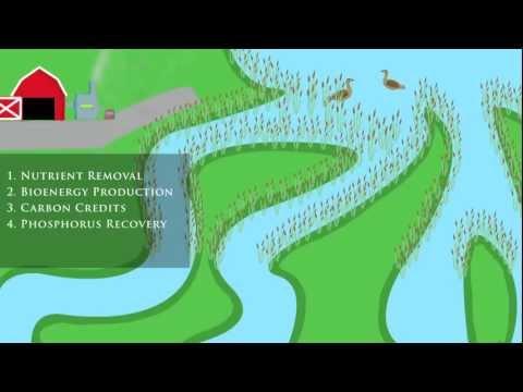Netley--Libau Nutrient-Bioenergy Project Video