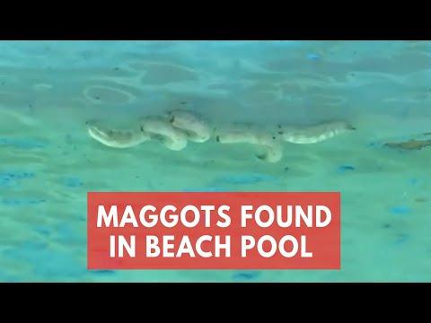 Maggots found in Sydney beach pool