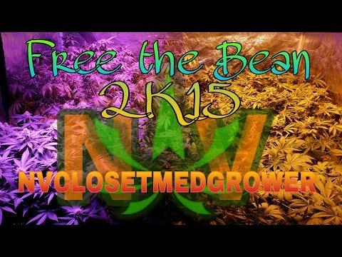 FTB 2k15.  Beyond Dream. Free The Bean