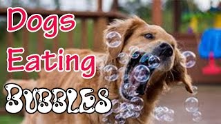 Happy dogs eating bubbles