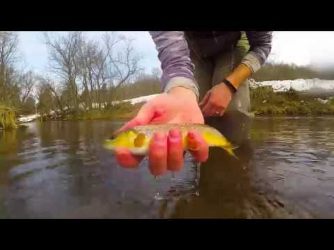 Fly Fishing the Driftless 2017