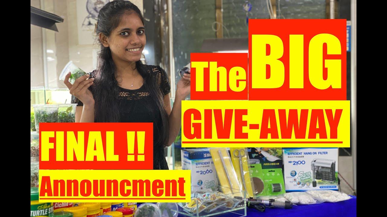 50K Subscribers Big Giveaways Final Announcement | Mayur Dev's Biggest Aquarium Giveaway Ever